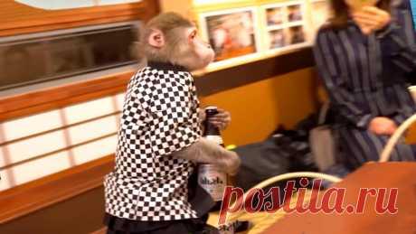 Рестораны с обезьянами-официантами. Какие еще оригинальные рестораны можно найти на нашей планете   Папа на отдыхе   Яндекс Дзен