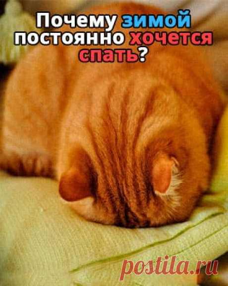 Почему зимой постоянно хочется спать | 100PDF