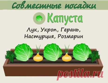 YoUbYGwUOKk.jpg (604×467)