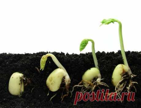 """Как вырастить крепкую здоровую рассаду: работа над ошибками  Выращиваете вы рассаду уже двадцать лет или беретесь за это дело впервые, не имеет значения: напортачить может каждый. Начинающие огородники часто не знают всех секретов и тонкостей выращивания рассады. А садоводы со стажем нередко действуют по старинке, как привыкли, как бабушка научила, не допуская даже мысли о том, что ошибки тоже могут """"передаваться из поколения в поколение"""".  Сегодня мы будем рассматривать о..."""