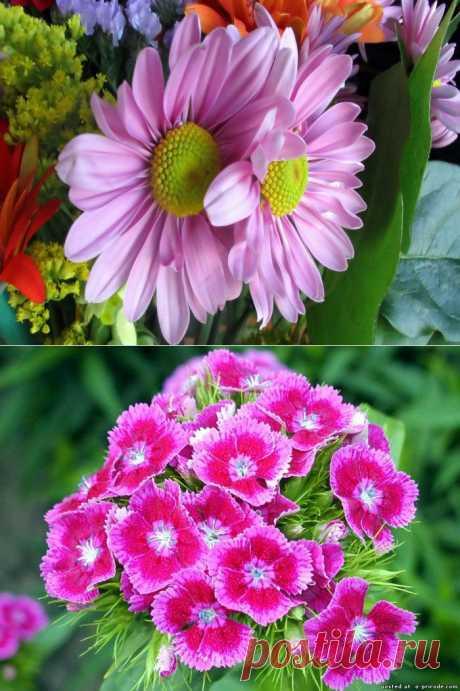 цветы картинки: