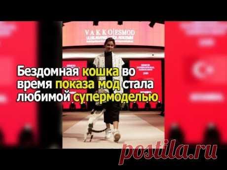 Бездомная кошка выбежала на подиум во время показа мод и стала любимой супермоделью - YouTube
