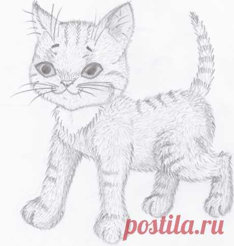 «Котик довольный» — карточка пользователя slavashishaev в Яндекс.Коллекциях