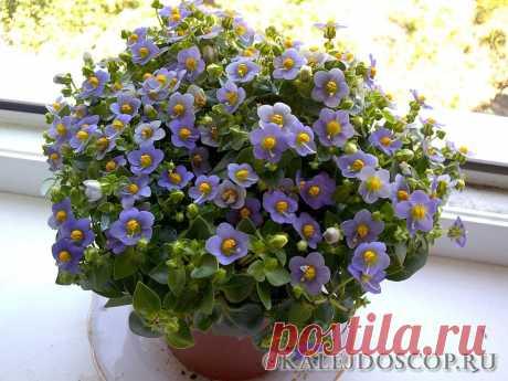 Хитрость для домашних растений - цветут красивее и пышнее | Калейдоскоп