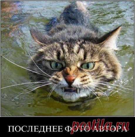 Мой Мир@Mail.Ru   ДОПЛЫВУ ТЕБЕ ПИПЕЦ !!!