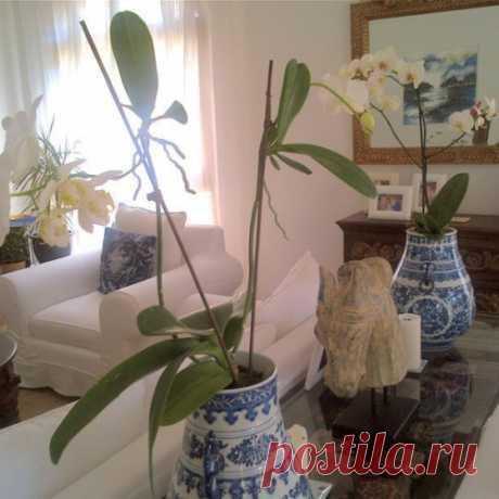 Los secretos de la cultivación de las orquídeas: todo que es necesario saber