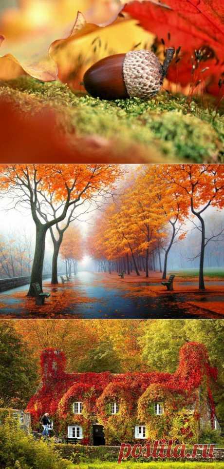 Все краски осени - Фото - Калейдоскоп Эмоций