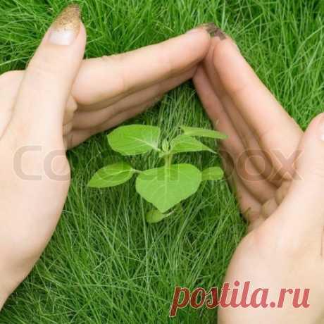 Растения-обереги от сглаза и порчи.