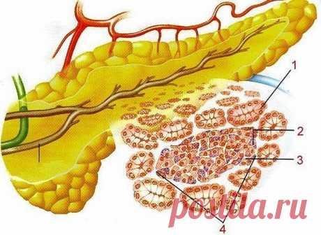 Что делать, когда беспокоит поджелудочная железа? - Калейдоскоп событий  Есть способ не только облегчить страдания, но и навсегда забыть о этой напасти….. Это семя льна…, оно единственное! способно вылечить вашу поджелудочную железу. Нужно: Свежемолотую столовую ложку семян льна […]