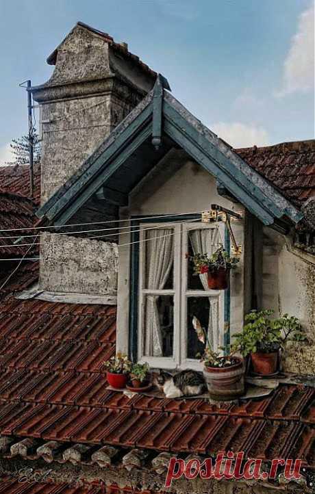 А если нет сада? Есть балкон или окно! | СДЕЛАЙ САМ!