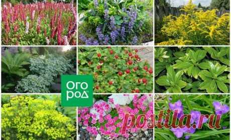 Осторожно! Декоративные растения, которые быстро могут стать сорняками | Прочие многолетники (Огород.ru)
