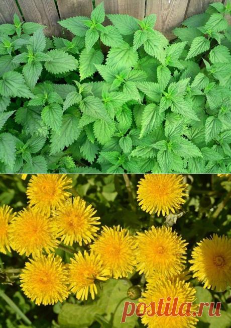Как использовать сорняки после прополки | Почва и плодородие (Огород.ru)