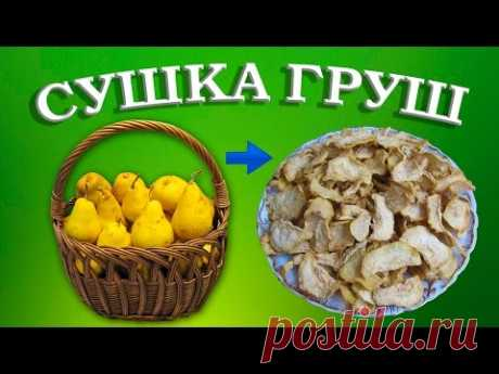 Полезные свойства груши – Польза груши – Как высушить груши?