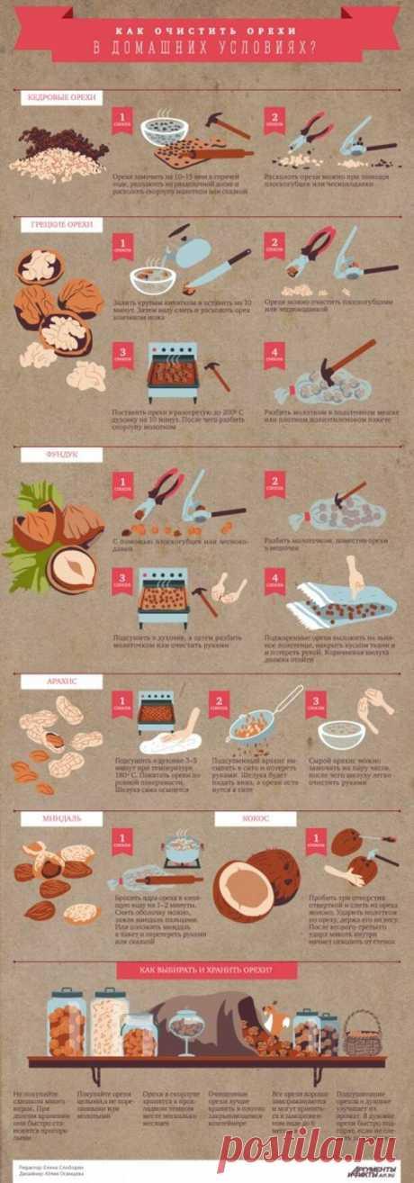 Как очистить орехи разных видов от скорлупы: инфографика | АиФ Кухня