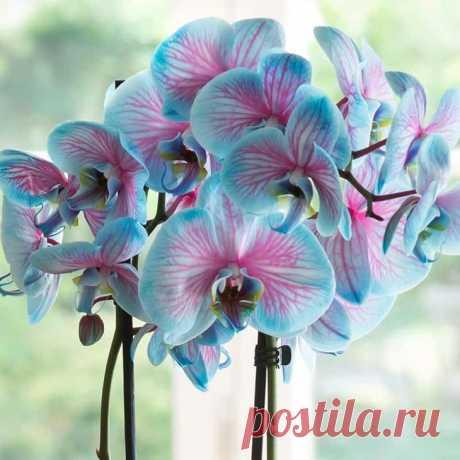 Сорта орхидей: самые красивые виды, фото и названия Преимущества Во всем мире можно встретить огромное количество различных сортов орхидей. Для начала стоит сказать о том, что это одно из самых популярных домашних растений. Основные причины популярност...