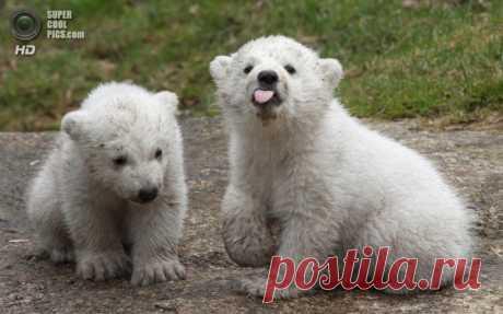 Несмотря на грозный вид, медведи могут быть очень милы