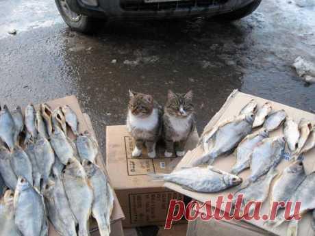 Продавцы: Покупаем рыбу! Рыбу покупаем?