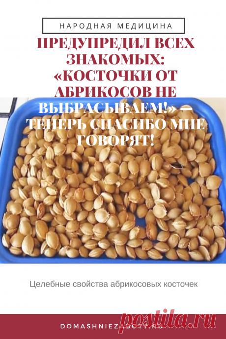 ПРЕДУПРЕДИЛ ВСЕХ ЗНАКОМЫХ: «КОСТОЧКИ ОТ АБРИКОСОВ НЕ ВЫБРАСЫВАЕМ!» — ТЕПЕРЬ СПАСИБО МНЕ ГОВОРЯТ! — domashniezaboty.ru