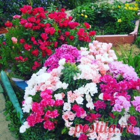 На данном изображении может находиться: цветок, растение, на улице и природа