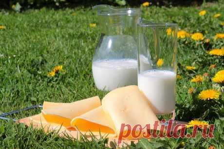 Можно ли употреблять молоко при обострении панкреатита. Полезные свойства для поджелудочной железы | Природа Лечит | Яндекс Дзен