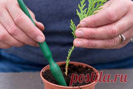 9 садовых растений, которые несложно вырастить из черенков