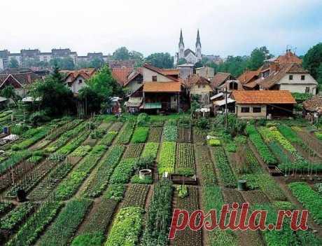 🔶 Выращивание овощей по Джону Джевонсу – небывалый урожай