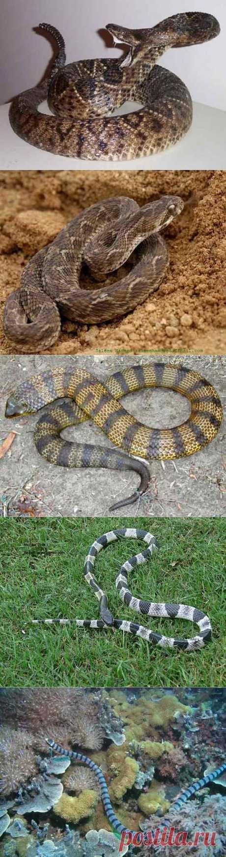 Самые ядовитые змеи в мире | Среда обитания