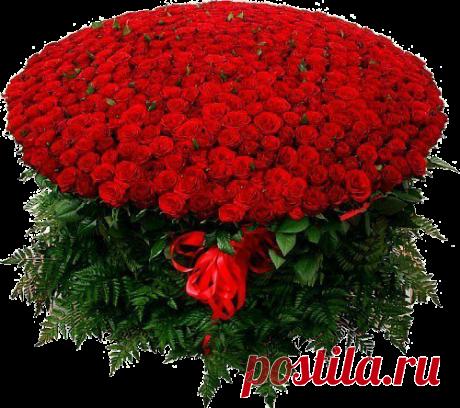 Плейкаст «21 мая --- Всемирный день роз. Полюбуйтесь этой красотой !»