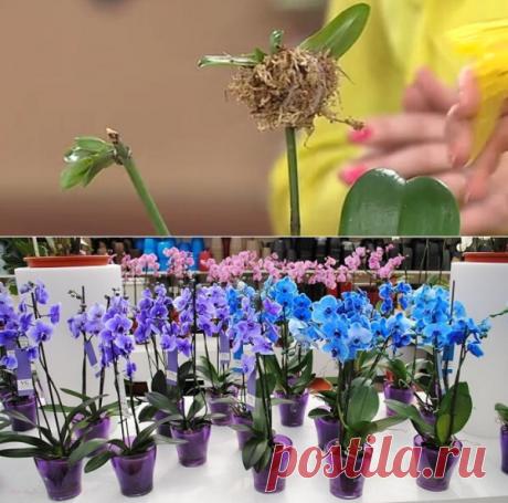 Секреты рассадки орхидей: как превратить 1 растение в 100 | Тысяча и одна идея