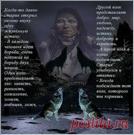 La parábola sobre los lobos.