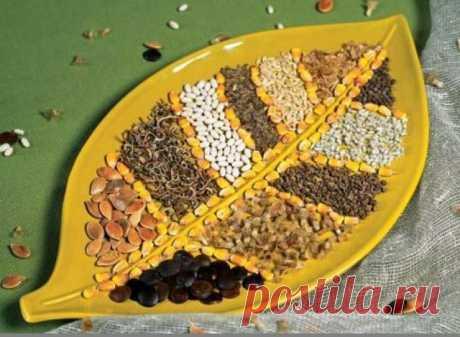 Сроки хранения и посева, условия проращивания семян овощных культур / Журнал садовода Uleyskaya / 7dach.ru