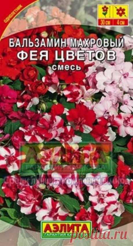 """Семена. Бальзамин """"Фея цветов"""", махровый, однолетник Однолетник.  Высота: 30 см. Диаметр: 4 см. Популярное комнатное растение и садовый летник имеет эффектные махровые цветки диаметром 4 см, напоминающие бутоны роз. Обильное цветение начинается уже через 6 недель после всходов и продолжается все лето. Растения крепкие, 30 см..."""
