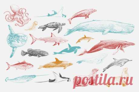 Illustration drawing style of marine life collection | Download now free vectors on Freepik Discover thousands of copyright-free vectors. Graphic resources for personal and commercial use. Thousands of new files uploaded daily.