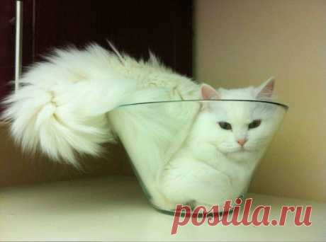 Кошки - жидкость!   КУРЬЕЗЫ