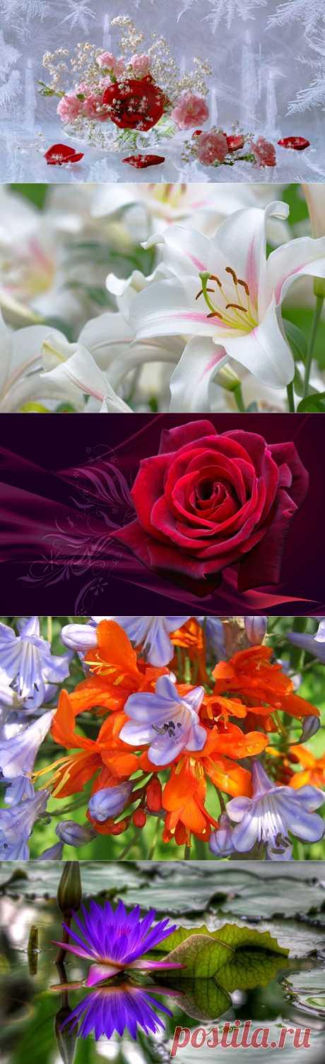 Обои на рабочий стол - Природа, цветы...
