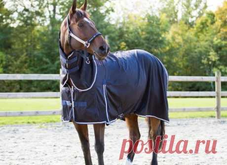 Попоны для лошадей (зимняя, дождевая, от насекомых): описание видов, как сделать своими руками, размеры и выкройка, фото