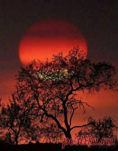 Доброй ночи! А завтра будет новый невероятно прекрасный день!  #сны_и_явь@intensive_taropy