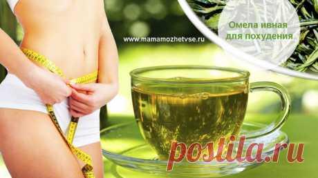 """Омела ивная для похудения Сайт """"Мама может все!"""" поможет похудеть и расскажет о применении омелы ивной."""