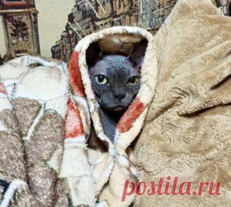 Смешные кото-фотки: видит око👁, смеётся рот😸 | Мой обожаемый кот | Яндекс Дзен