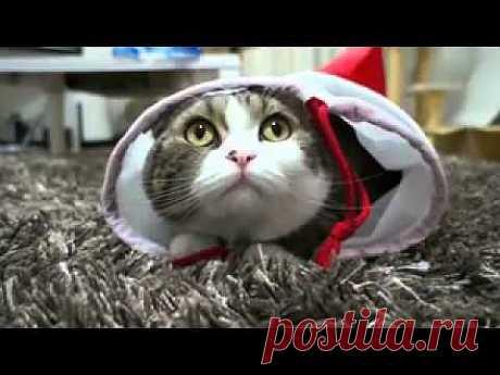 Забавный кот - YouTube