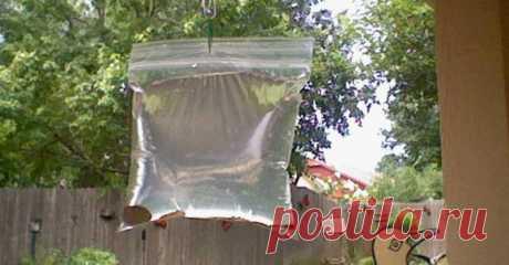 Как обычный пакет с водой разгоняет надоедливых мух - Копилка идей