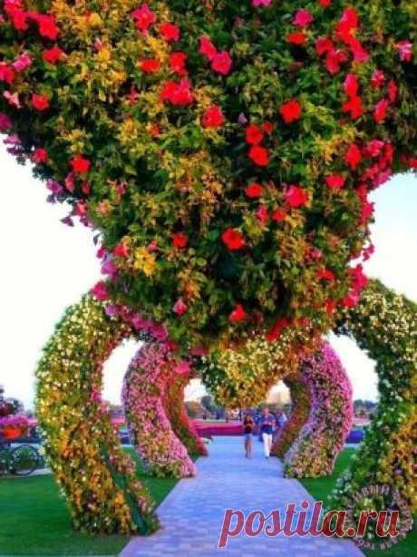 Сад чудес нас встречает...  И погулять приглашает....смелее, ведь там..так красиво продолжение - ЖМИ ⇓⇓⇓