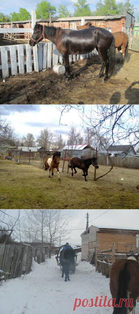 Лошади в деревне