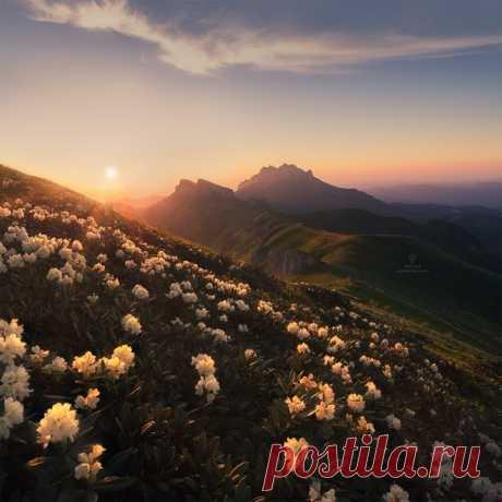 Цветение рододендронов в Природном парке Большой Тхач, Республика Адыгея. Спокойной ночи.
