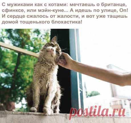 Приколы про котов и кошек (смешные фото с анекдотами)