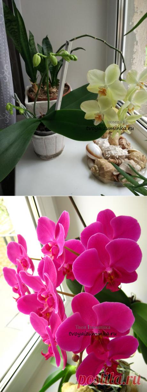 Как ухаживать за орхидеей (фаленопсис) в домашних условиях после покупки в горшке, мой опыт