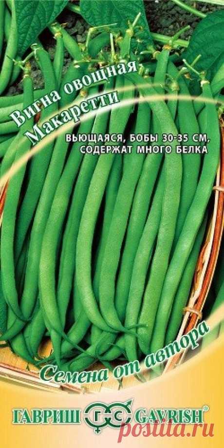 """Семена. Вигна """"Макаретти"""" (10 штук) Очень урожайная культура со спаржевыми бобами, с высокой питательной ценностью."""