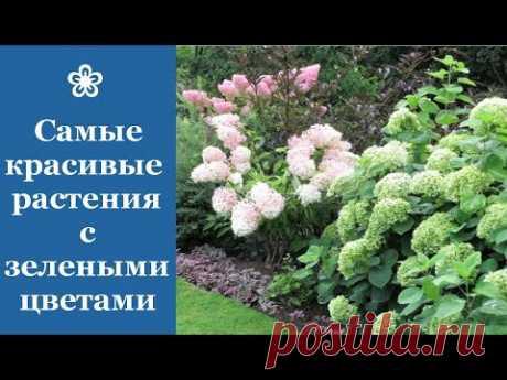 ❀ Самые красивые растения с зелеными цветами