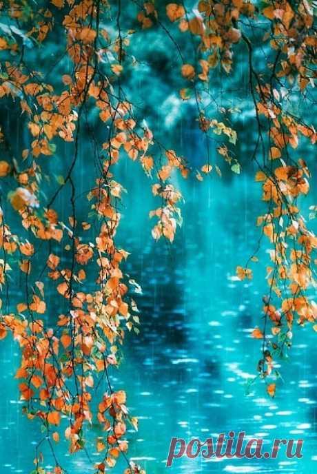 С листвой осенней пусть улетит всё плохое из наших мыслей... из нашей жизни...Осень, подари нам всем по капельке волшебства...  Пусть по-маленькой, но обязательно каждому...