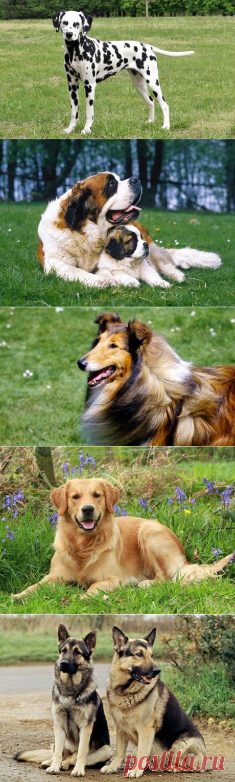 5 пород собак – TV звёзд | PetTips